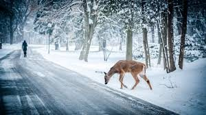 Winter scene depicting a deer and a woman walking down a partially snow covered road